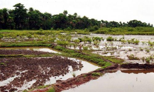 Zdjęcie GAMBIA / Gambia /   / Pora deszczowa
