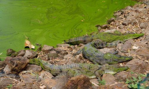 Zdjęcie GAMBIA / Bandżul / Rezerwat krokodyli / Słodkie lenistwo nad wodą