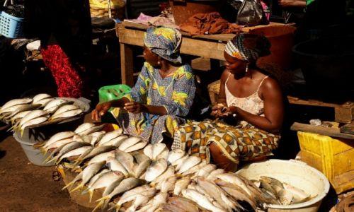 Zdjęcie GAMBIA / Serrekunda / targ / Ryby, świeże ryby!