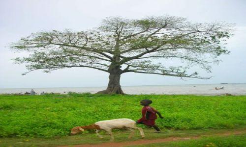 Zdjecie GAMBIA / brak / Albreda / chlopiec z koza