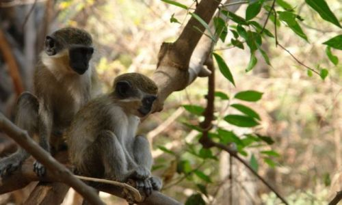 Zdjęcie GAMBIA / brak / Gambia / Blisko natury