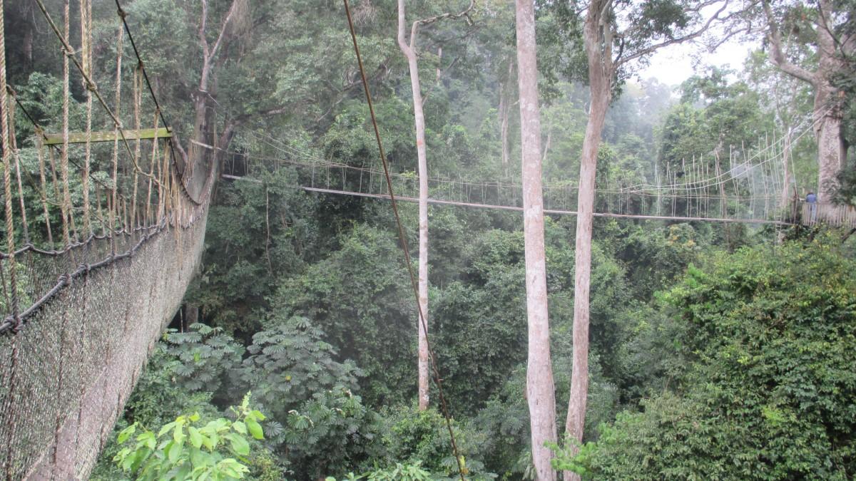 Zdjęcia: Kakum National Park, Abirem Municipal District, Kakum National Park nad koronami drzew, GHANA