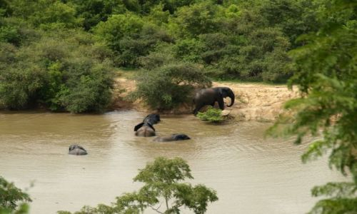 Zdjęcie GHANA / Afryka / Mole NP / slonie z mole national park