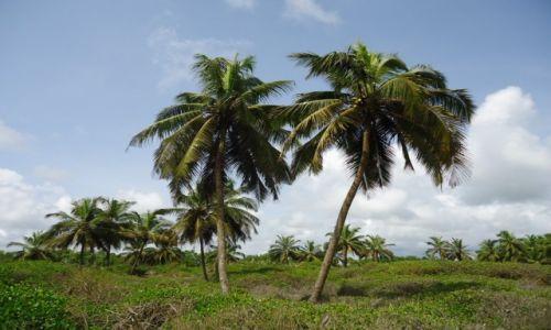 Zdjęcie GHANA / Western Region / okolice Axim / Palmy