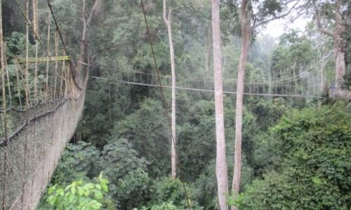 Zdjecie GHANA / Abirem Municipal District / Kakum National Park / Kakum National Park nad koronami drzew