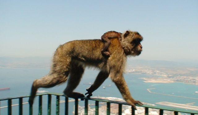 Zdjęcia: Gibraltar, :), GIBRALTAR