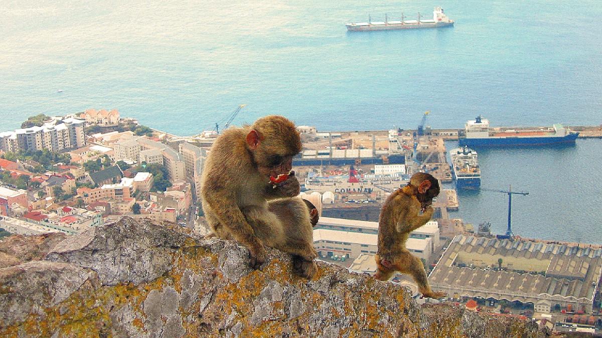 Zdjęcia: Gibraltar, Gibraltar, A ja sobie nic nie robie, GIBRALTAR