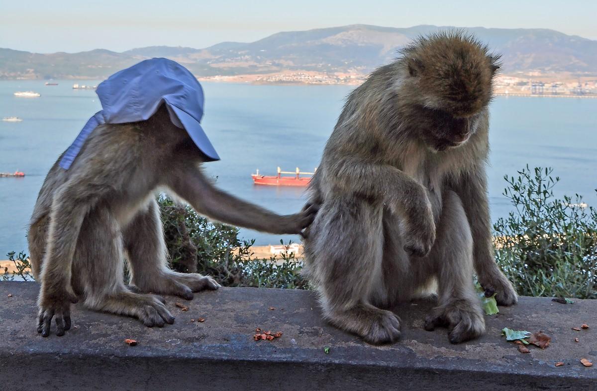 Zdjęcia: Gibraltar, ładnie mi ?, GIBRALTAR