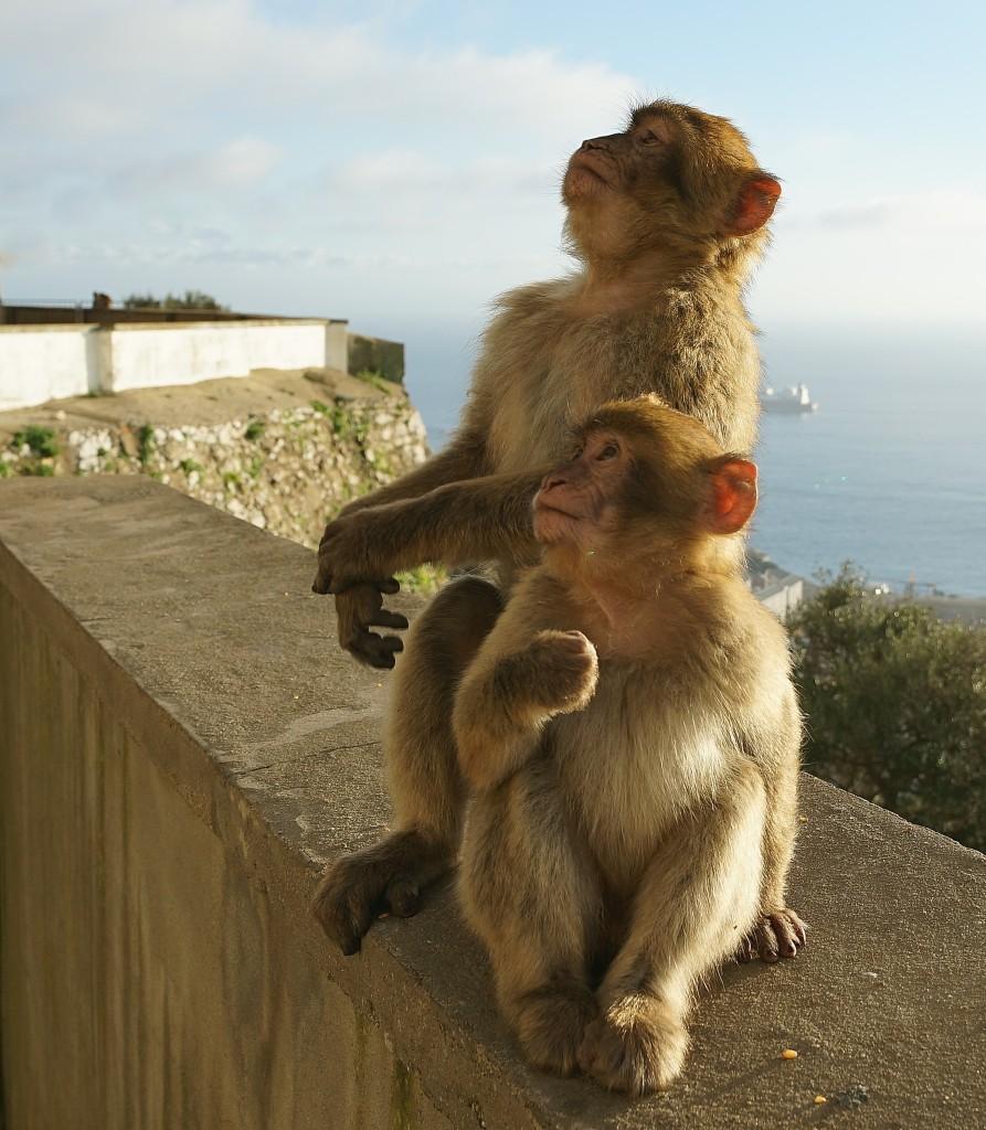Zdjęcia: ., Skała Gibraltarska , Ooo, tam leci samolocik, GIBRALTAR