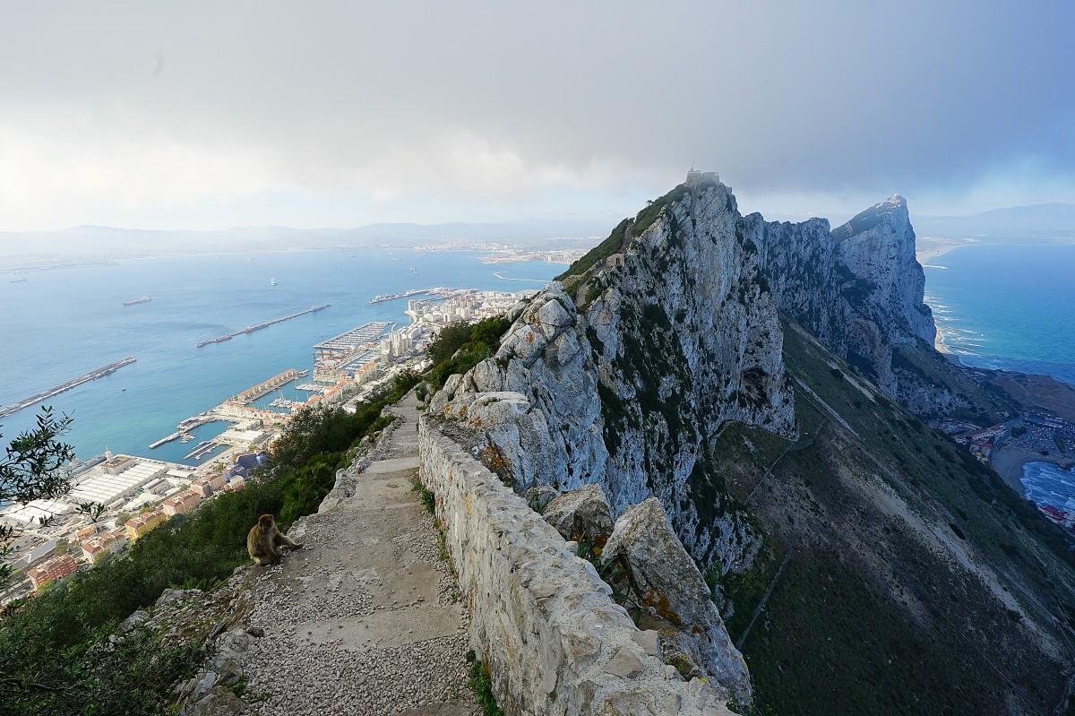 Zdjęcia: ., Skała Gibraltarska , Ta, która chwilę później wskoczyła mi na plecak, GIBRALTAR