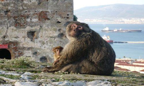 Zdjecie GIBRALTAR / Gibraltar / Port / Jedni z mieszkańców Gibraltaru