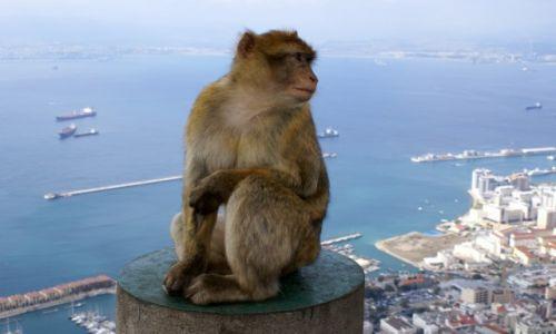 Zdjecie GIBRALTAR / Gibraltar / Gibraltar / Portret