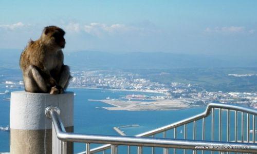 Zdjęcie GIBRALTAR / Gibraltar / - / W krainie Magotów