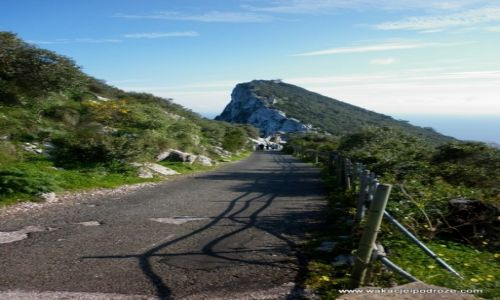Zdjęcie GIBRALTAR / Gibraltar / - / Skałą gibraltarska