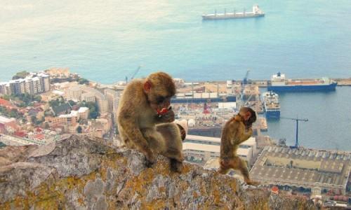 Zdjecie GIBRALTAR / Gibraltar / Gibraltar / A ja sobie nic nie robie