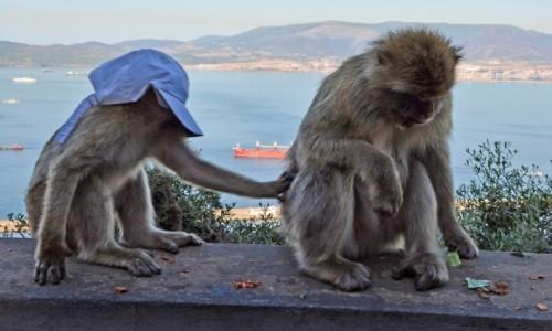Zdjecie GIBRALTAR / - / Gibraltar / ładnie mi ?
