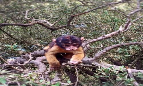 Zdjecie GIBRALTAR / xxx / Skała Gibraltarska / Baby Małpka