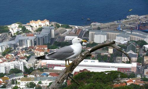 Zdjęcie GIBRALTAR / . / Gibraltar / panorama Gibraltaru
