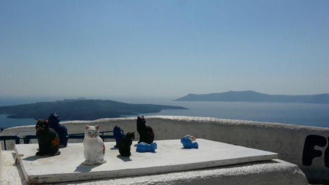 Zdjęcia: Santorini, Santorini, Koty, GRECJA