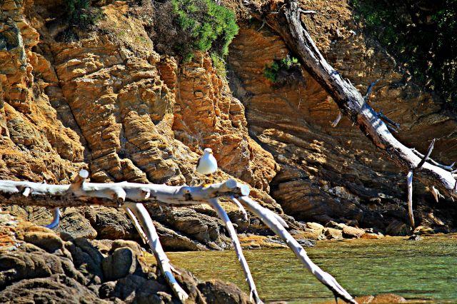 Zdjęcia: Wyspa Skhiatos, Skiathos, GRECJA