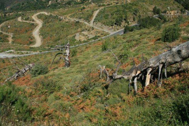 Zdjęcia: Góry Tajget, Messenia, W drodze z Kalamty do Sparty przez Tajget, GRECJA