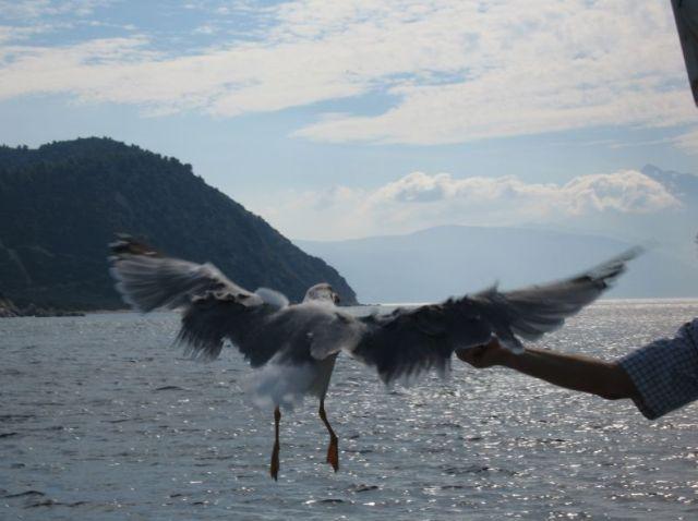 Zdjęcia: gdzieś na wodzie/ św. góra Athos, Ptasior, GRECJA