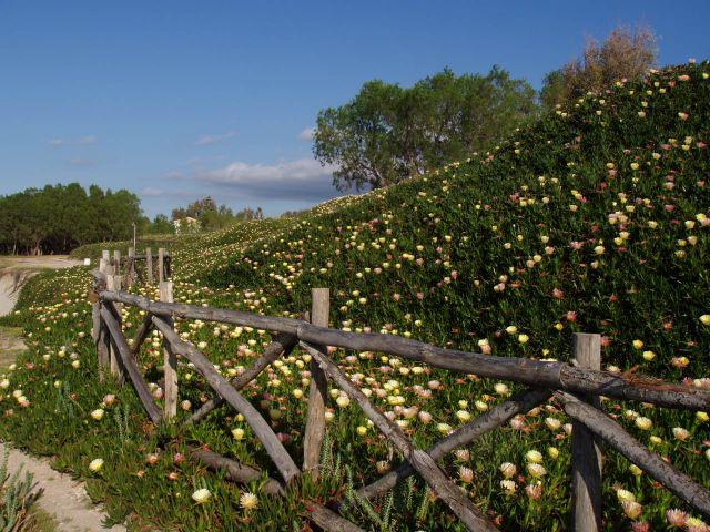Zdjęcia: Kos i okolice, Wyspa Kos, plot, GRECJA