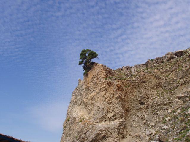 Zdjęcia: Kos i okolice, Wyspa Kos, drzewo, GRECJA
