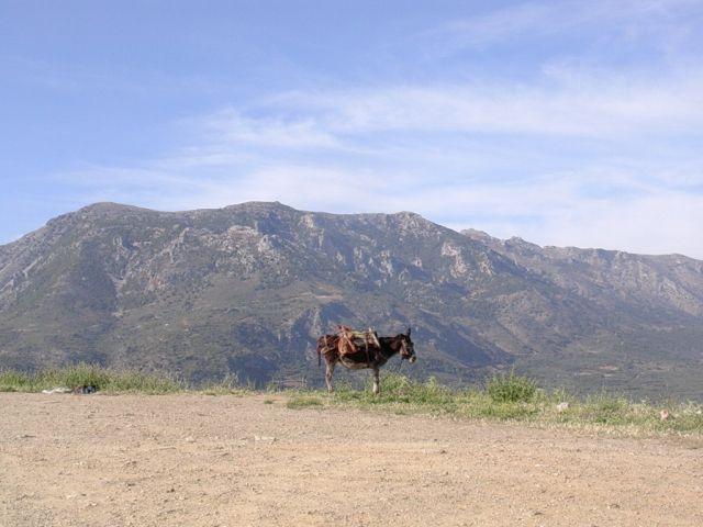 Zdjęcia: Gdzies w górach, Kreta, Osiołek, GRECJA