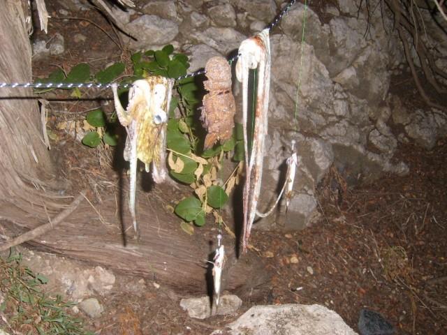 Zdjęcia: Amiros Skala, Rodos, polowanie2, GRECJA