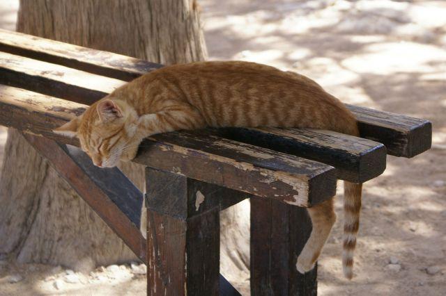 Zdjęcia: Rodos, zmęczony upałem, GRECJA