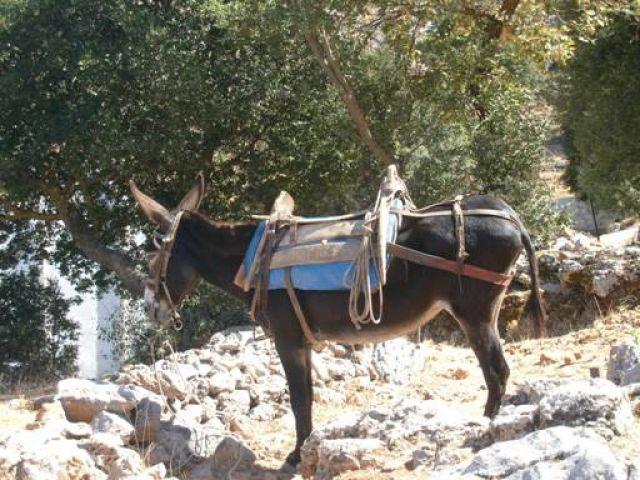 Zdjęcia: płaskowyż Lasithi, Kreta, osiołek, GRECJA