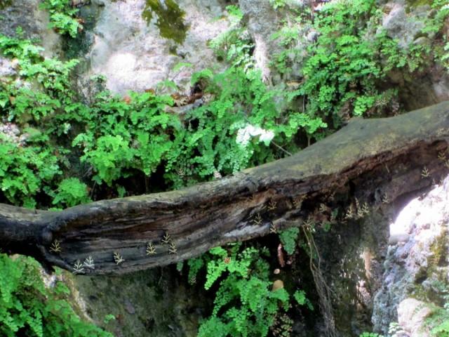 Zdjęcia: Dolina Motyli, Rodos, Ćmy z Doliny Motyli, GRECJA