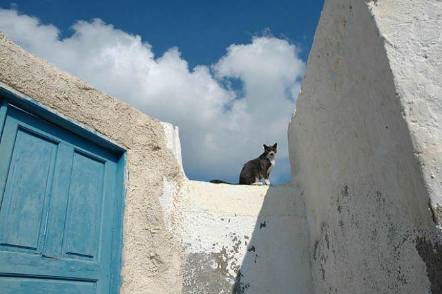 Zdjęcia: cyklady, santorini, cyklady, santorini, kot w biało-niebieskiej oprawie, GRECJA