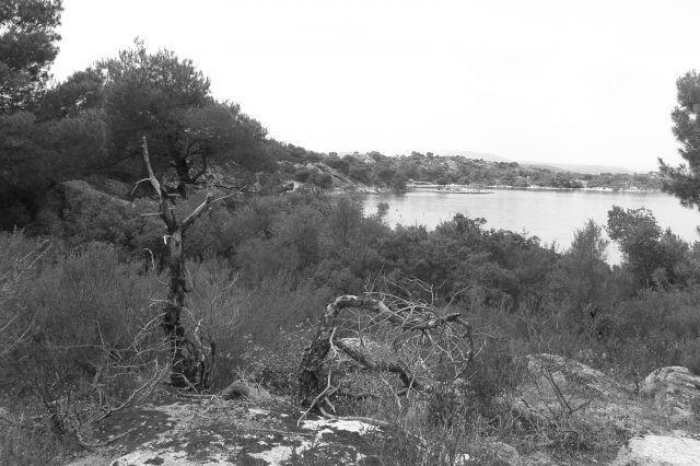 Zdjęcia: Sithonia, Półwysep Chalkidiki, z perspektywy lasu piniowego, GRECJA