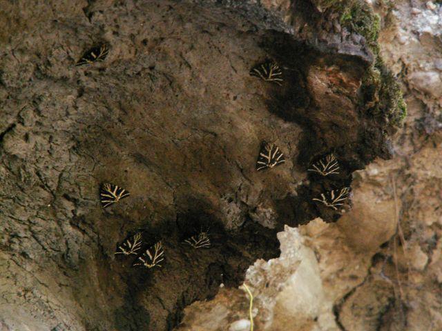 Zdjęcia: Dolina Motyli, Rodos, Motyle... w Dolinie Motyli, GRECJA