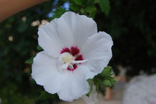 Zdjęcia: Kalambaka, kwiatek, GRECJA