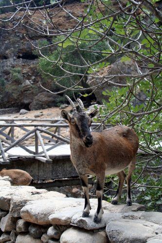 Zdjęcia: Kreta, Samaria, Kreta, Wąwóz Samaria 3, GRECJA