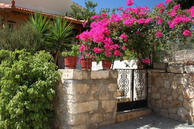 Zdjęcia: Rethymon, Rethymon, Przed domem, GRECJA
