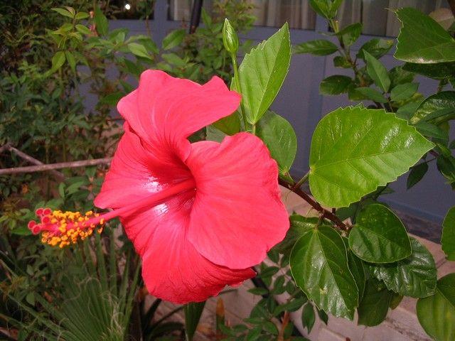 Zdjęcia: Nafplion, Peloponez, październikowe kwiaty Grecji, GRECJA