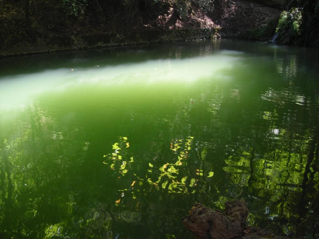 Zdjęcia: Valley of Butterflies, Rodos, jezioro motyli, GRECJA