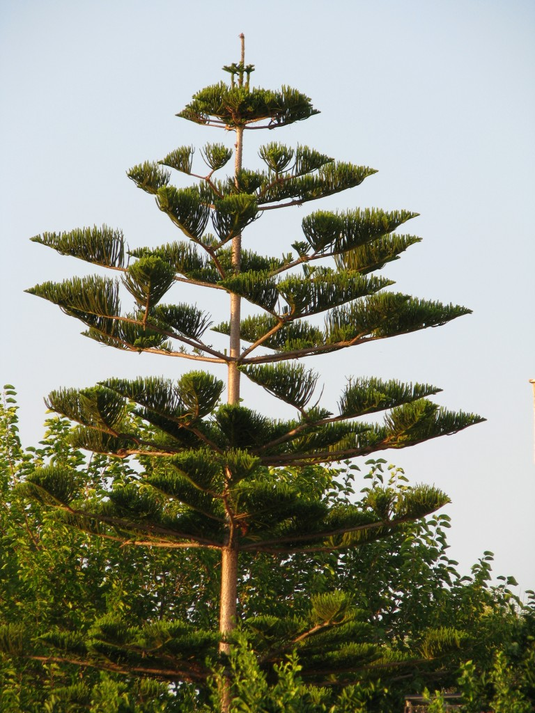Zdjęcia: Kakovatosh, Peloponez, drzewo, GRECJA