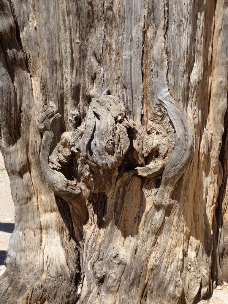 Zdjęcia: okolice Rethymnonu, Kreta, Uwięziony, GRECJA