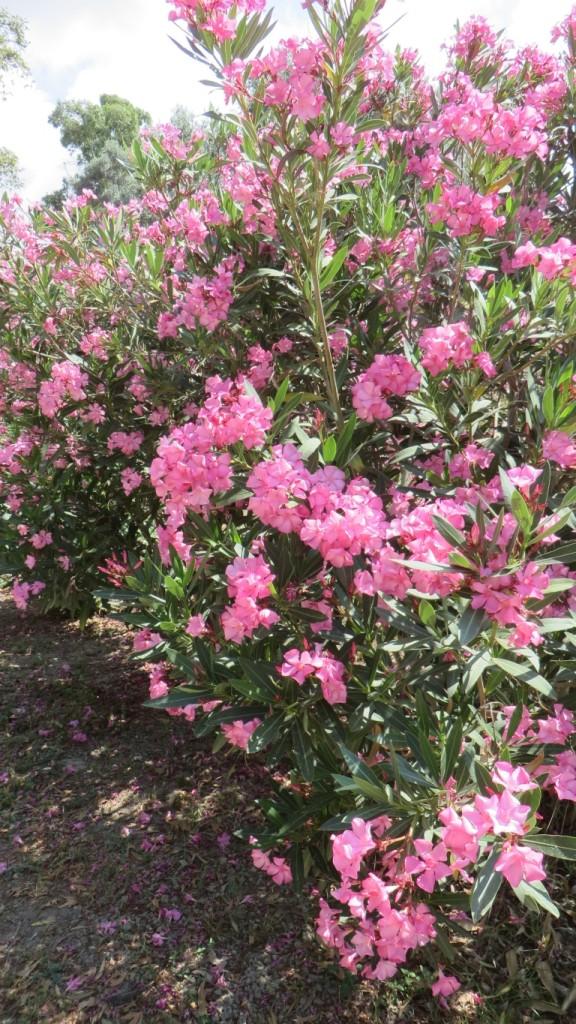 Zdjęcia: Gortyna, Kreta, kreteńska flora, GRECJA