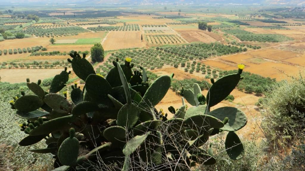 Zdjęcia: Fajstos, Kreta, kreteńska flora, GRECJA