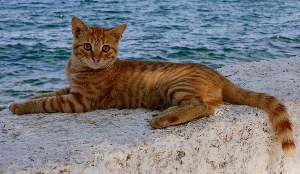 Zdjęcia: Nisyros, Dodekanez, rudy, GRECJA