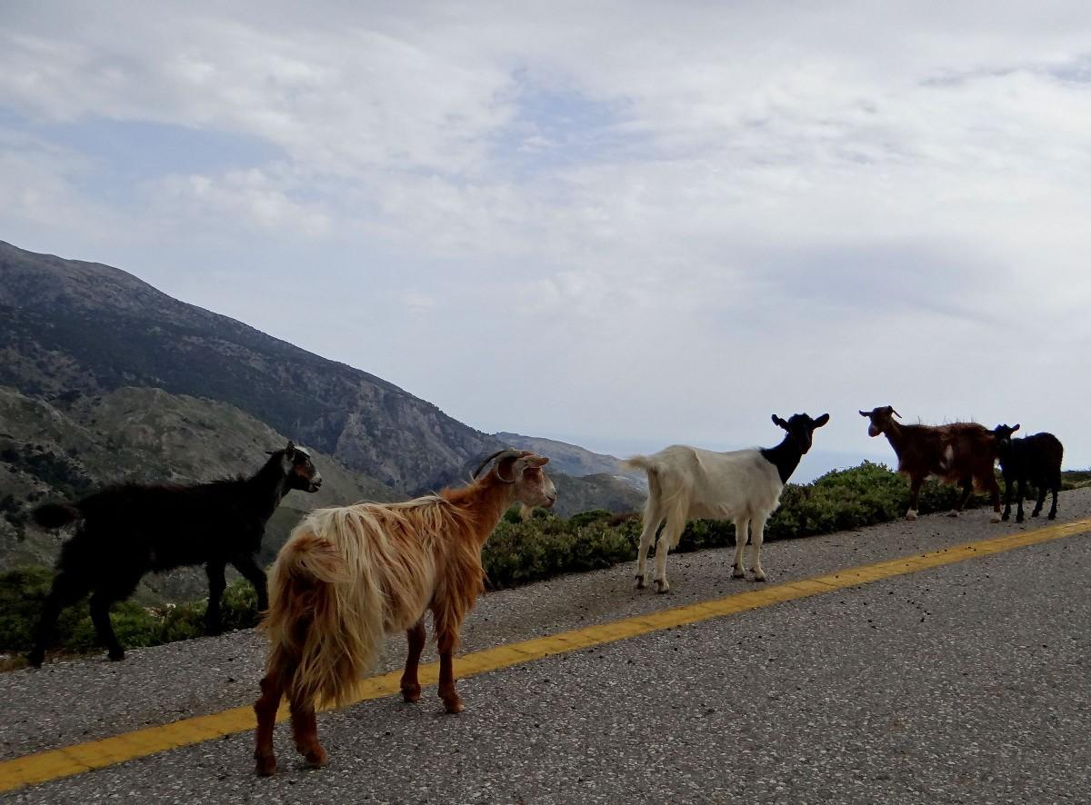 Zdjęcia: górska droga, Kreta, Gdzieś w górach Krety., GRECJA