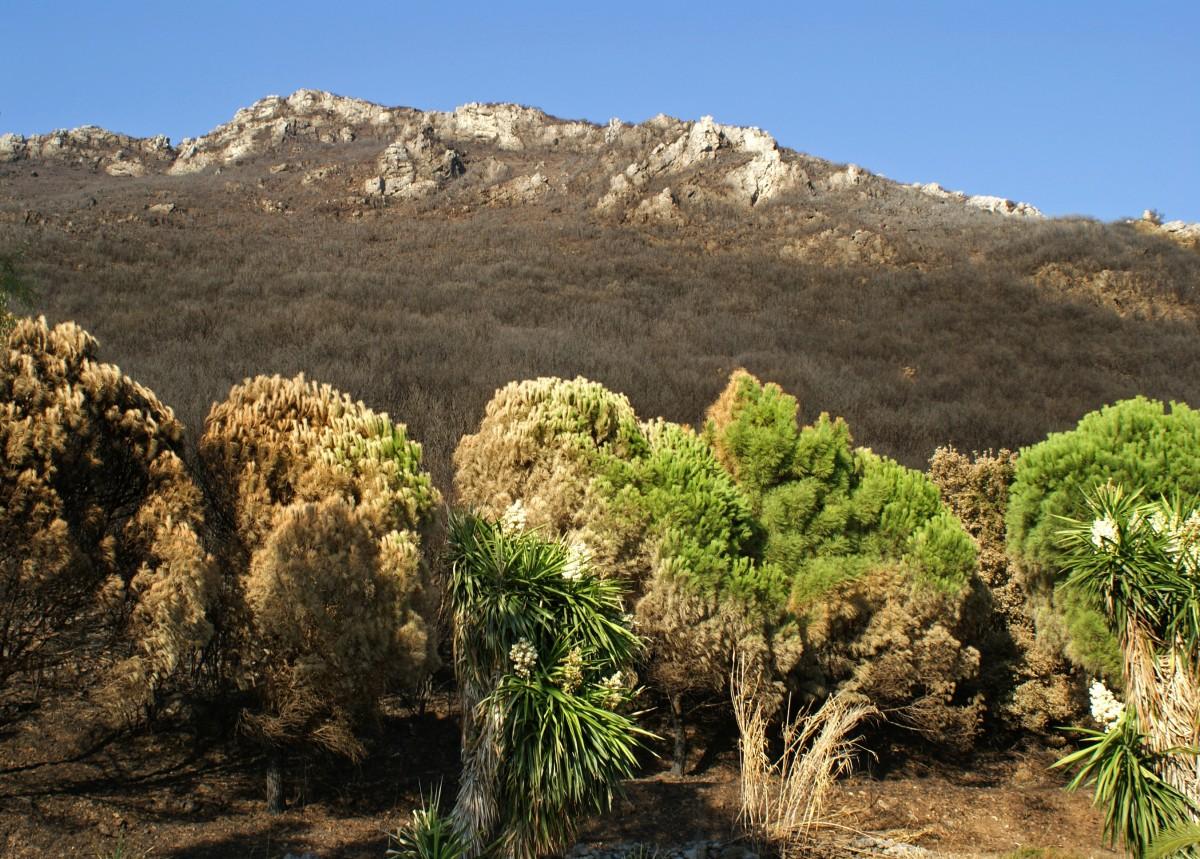 Zdjęcia: Korfu, Po pożarze, GRECJA