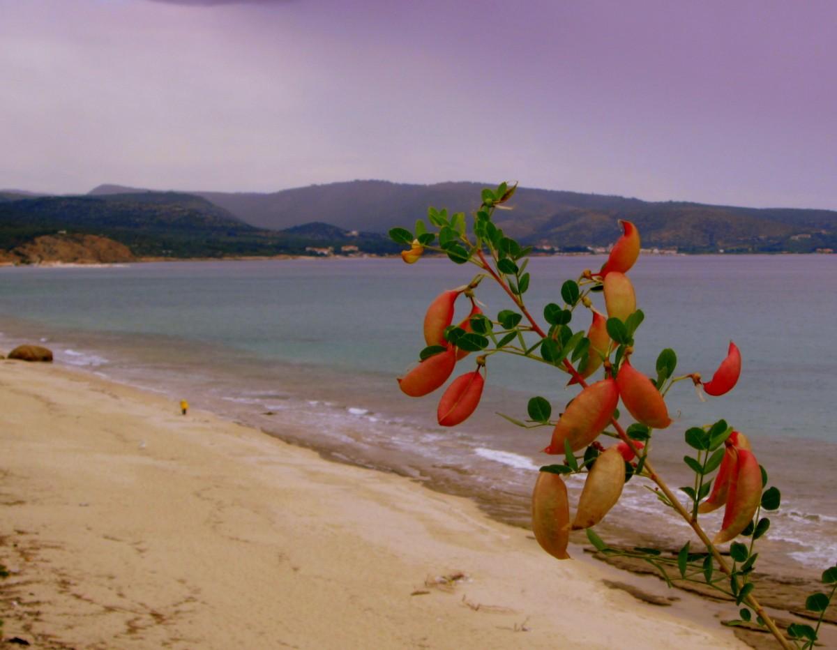 Zdjęcia: okolice Limenarii, Thassos, Prawie pusto, GRECJA