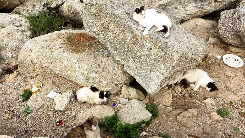 Zdjęcia: Wyspa Rodos - Rodos, Archipelag Dodekanez, rodyjskie koty, GRECJA